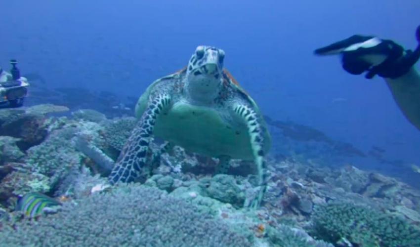 Troy Turtle