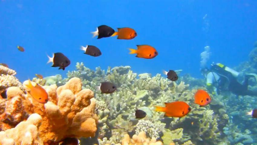 Webster - Torruji Fishes