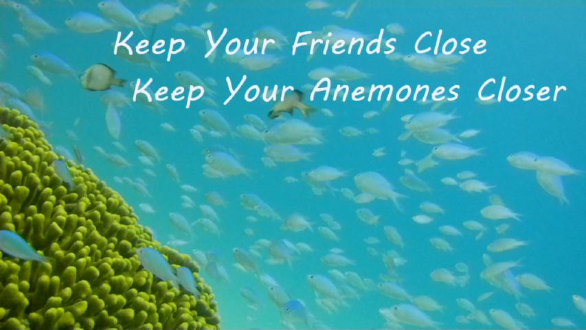 Webster - Divey with Ivy:  Keep your Anemones Closer