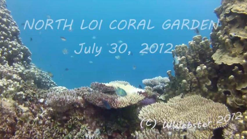 North Loi Coral Gardens